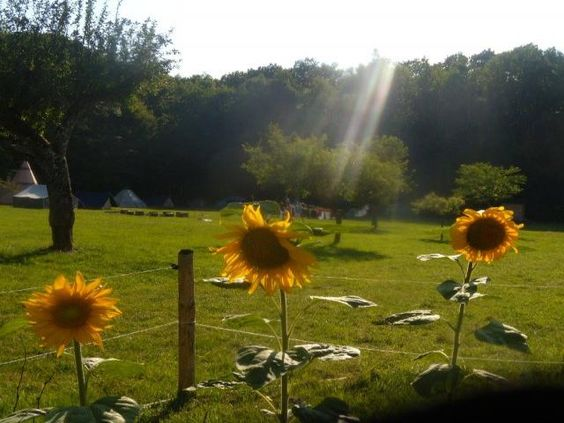 Les cabanes des 3 petits cochons: Coin camping - France-Voyage.com