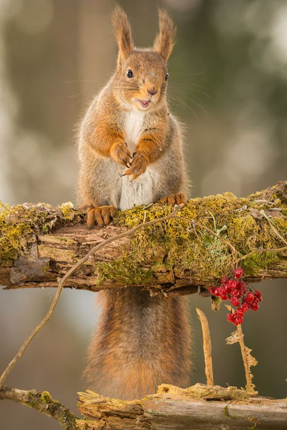 surprise by Geert Weggen on 500px