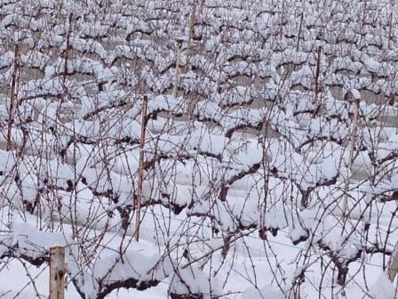 no wonder vines resist to tough conditions- pas de secrets la vigne est faite pour des conditions difficiles