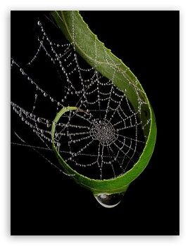 This is so delicately, gently pretty! I am not cool with spiders. Snakes and lizards, yes.: