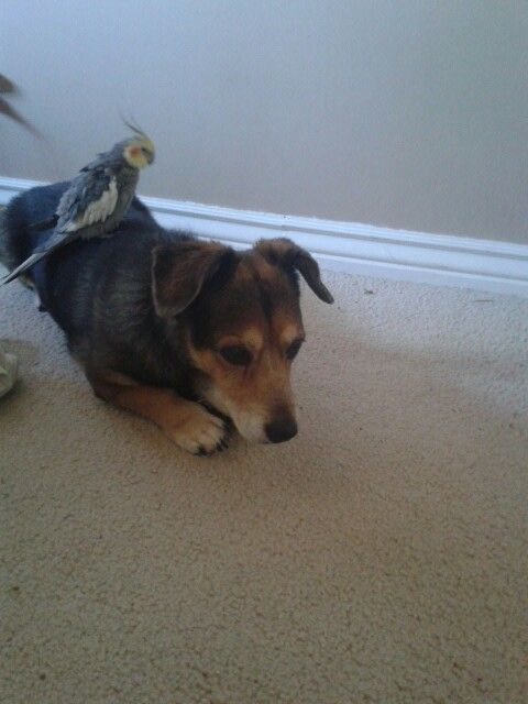 This is so cute ❤❤❤ ...... A dog and a bird