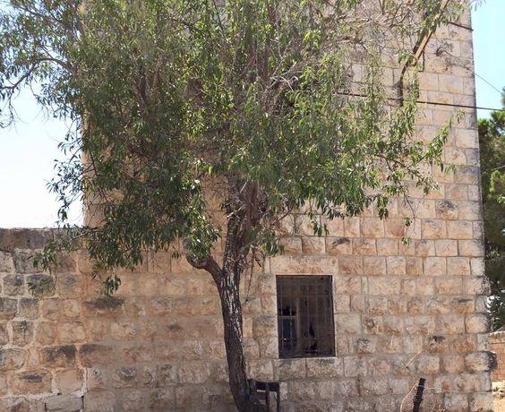مهمتي حراسة البيت حتى يأتي الغيّاب -في حوار الشجرة والبيت القديم، (الصورة في قرية دير غسانة-رام الله-فلسطين)