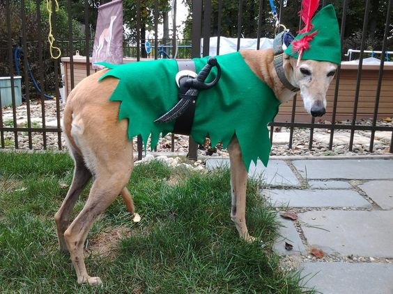 peter pan dog costume