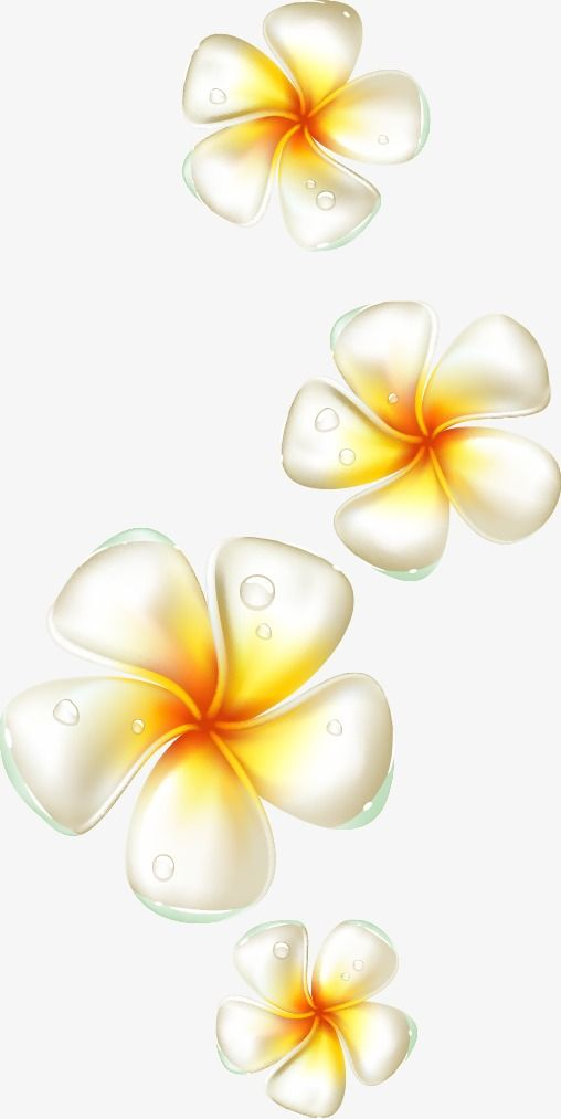 Egg Flower Elements Plumeria Flowers Great Png Transparent Clipart Image And Psd File For Free Download Eggs Flowers Plumeria Flowers Flowers