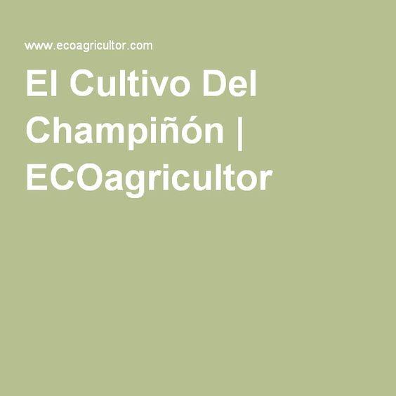 El Cultivo Del Champiñón   ECOagricultor