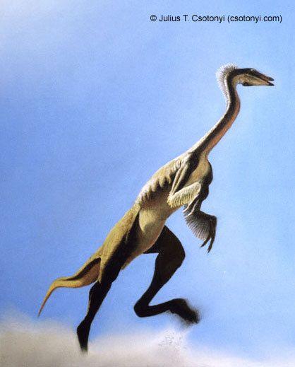 Dromiceiomimus sp.