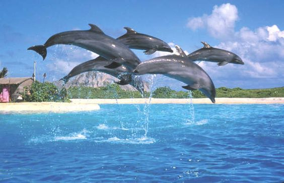 Dolphins at Sea Life Park!