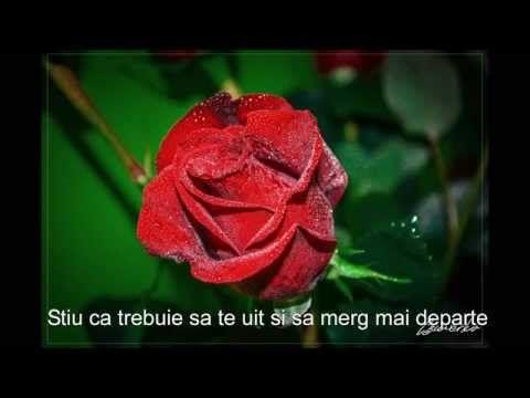 Celine Dion Just Walk Away Subtitrare In Limba Romana Youtube Celine Dion Celine Floral