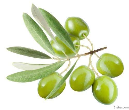 تفسير رؤية الزيتون في المنام للعزباء Olive Olive Tree Green Olives