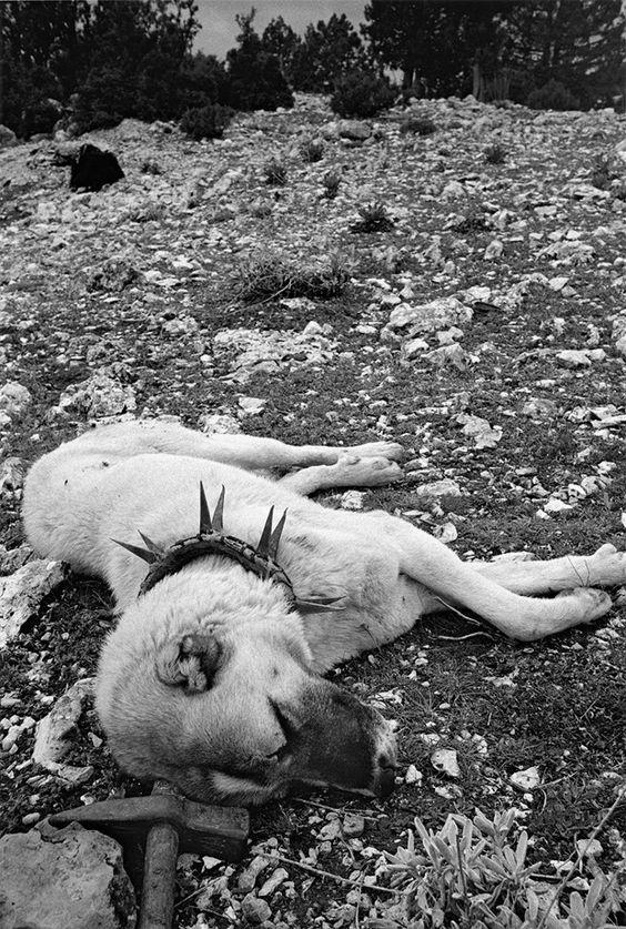 Fotograf M. Vanden Eeckhoudt: Tiere posieren nicht – Seite 11 | Reisen | ZEIT ONLINE