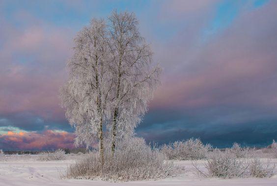 Photograph Winter wonderland III by Elga Vigrieze on 500px