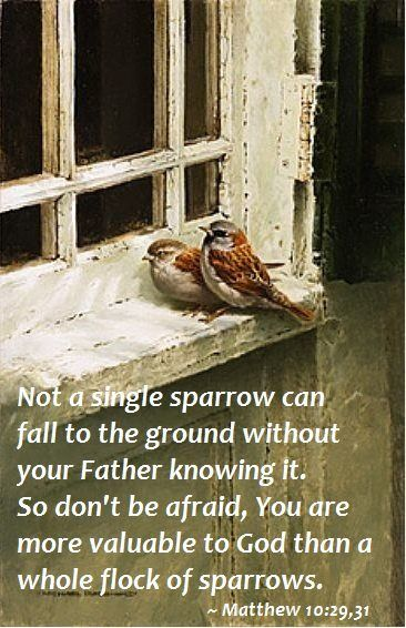 "** Matthew 10:29,31 - ""Not a single sparrow can fall to the ground without your Father knowing it. So don't be afraid. You are more valuable to God than a whole flock of sparrows."" **:"