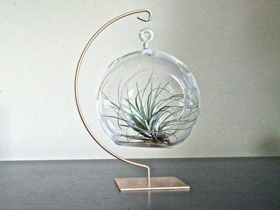 Hanging Glass Globe Air Plant Terrarium with Gold Painted Stand