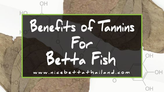 Benefit Of Tannins