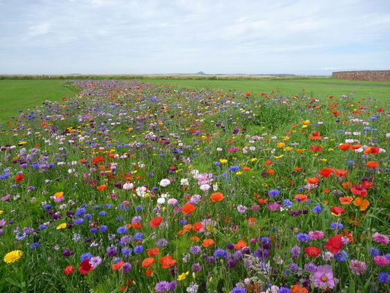 animals in wildflower pictures | NT6779 : Coastal East ...
