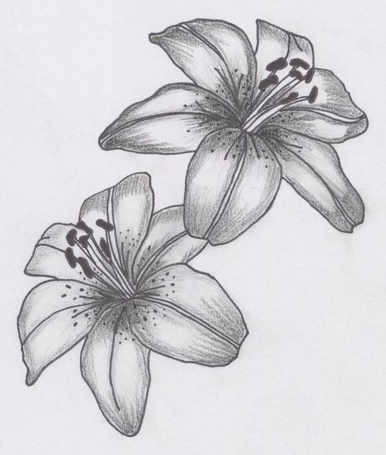 Dibujar Flores, Azucenas, Flores Mix, Rosas, Intentar, Proyectos, Lapiz, Resultado, Imagen