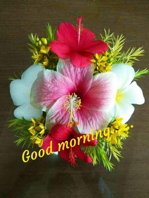 Good Morning Images For Whatsapp In 2020 Good Morning Flowers Good Morning Flowers Pictures Good Morning Roses