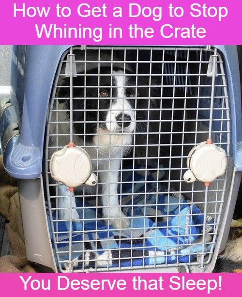 How To Get A Dog To Stop Whining In The Crate Dog Whining Puppy Whining Stop Whining