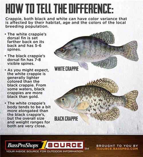 Crappie Fishing Tips How To Catch Crappie In 2020 How To Catch Crappie Crappie Fishing Tips Crappie