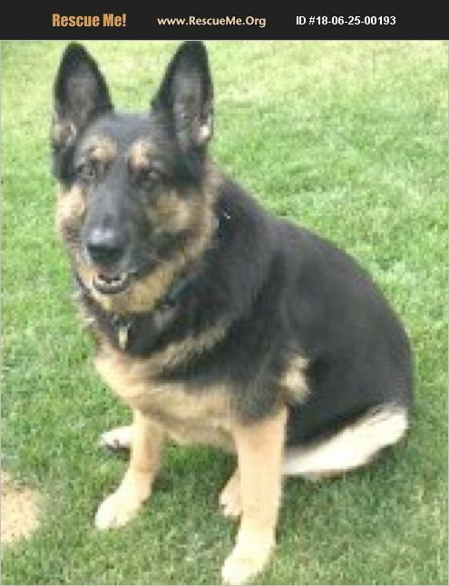 Adopt 18062500193 German Shepherd Rescue Greenfield In