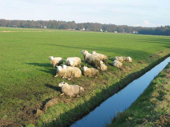 Over de Oostdijk richting Valkeveen, Naarden.