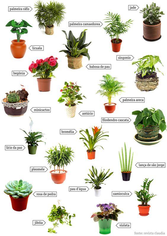 Ervas aromáticas e jardins em casa– 11 dicas geniais