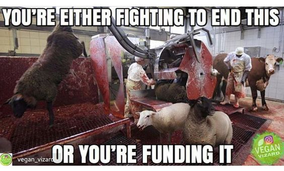 No I between if you're not vegan your funding it if you are your fighting it