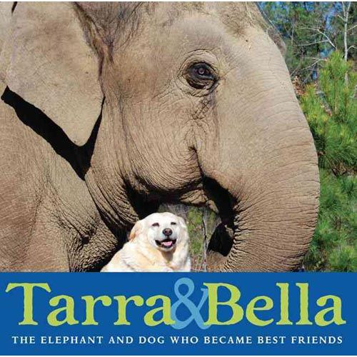 A stray Labrador named Bella befriends Tarra, a former circus elephant and resident of the Elephant Sanctuary in Tennessee. While the pairing is unusual, the two are inseparable--even when a crisis threatens to separate them. Based on the national media sensation, this is a true story of friendship and loyalty.  (ER Nature J 599.67 B; Level N)