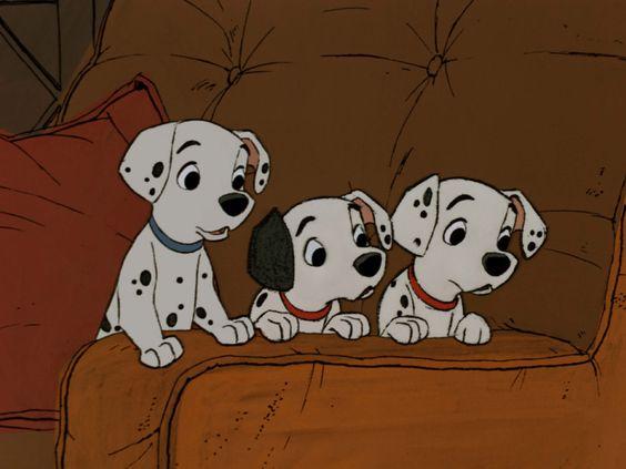 きょとんとした子犬たち
