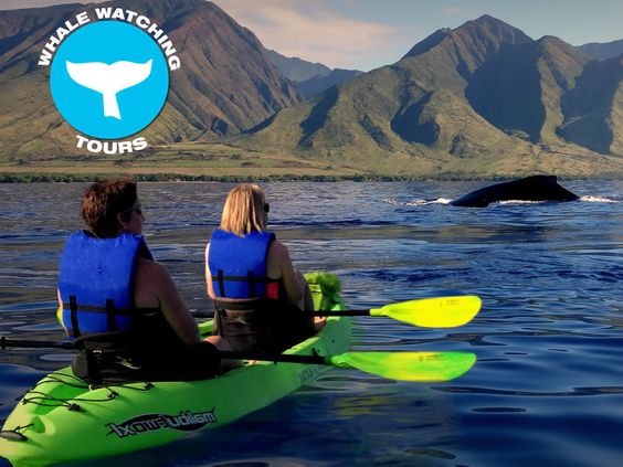 Feel the waves and spray when a whale breaches near your kayak. Certified marine guides our whale watching tours.