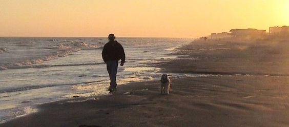 Il cane per poter viaggiare deve essere fornito di tutte le vaccinazioni previste, munito di tatuaggio di riconoscimento o microchip inserito. Prima di partire è consigliato farsi fare dal veterinario un certificato di Buona Salute.     http://www.petsparadise.it/cane/in-vacanza-con-il-cane-informazioni-per-viaggi-in-aereo-treno-navi-e-traghetti/