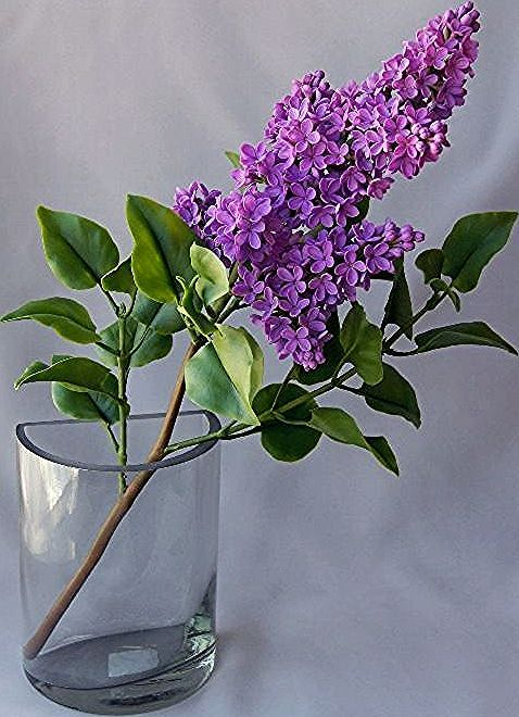 I Don T Know What Flower It Is But It S So Pretty In 2020 Flower Images Lilac Painting Lilac Flowers
