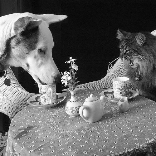 Hey! Tea time is not WE time.