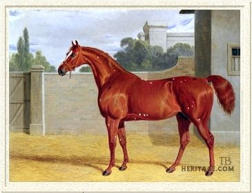Comus(1809)(Colt)Sorcerer- Houghton Lass By Sir Peter Teazle. 4x4 To Matchem, 4x5 To Snap & Herod, 5x5 To Marske.