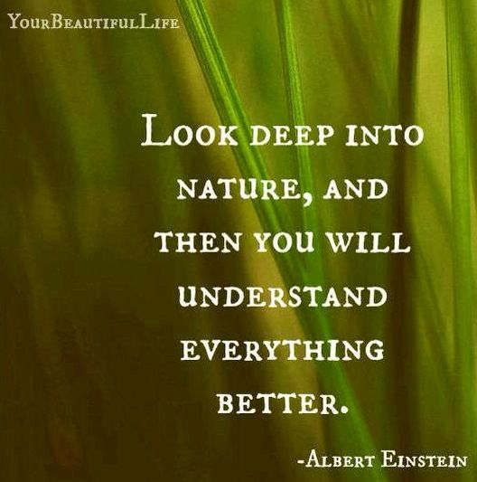 Life And Nature Quotes: Einstein, Positive Motivation And Built Environment On