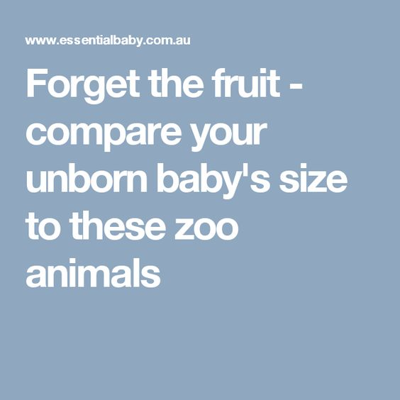 Forget the fruit - compare your unborn baby's size to these zoo animals