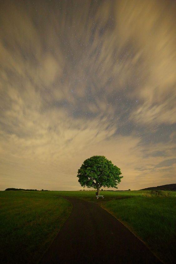 Ahorn by David