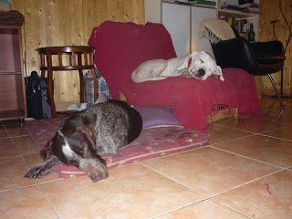 Inês e cãopanhia