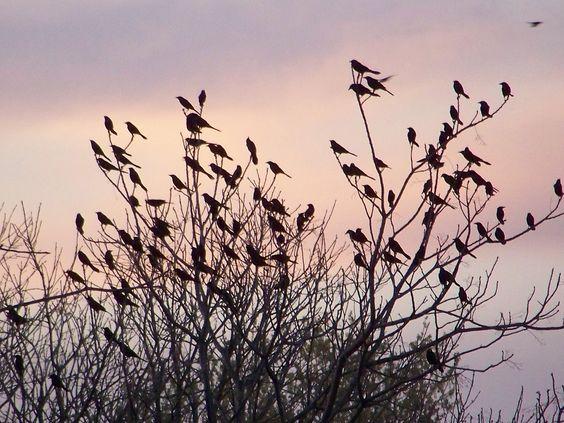 Flocking behavior.