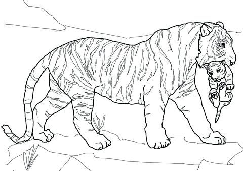 Tiger Coloring Pages Ideas With Awesome Pattern Free Coloring Sheets Horse Coloring Pages Farm Animal Coloring Pages Cat Coloring Page