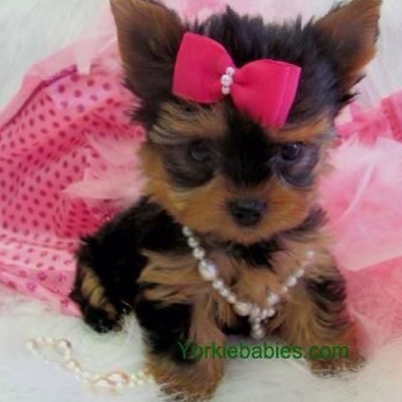 So cute! ;)