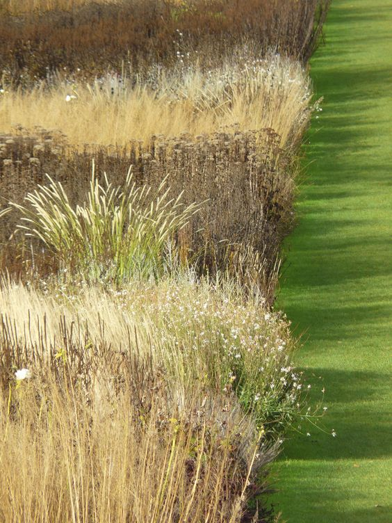 Rhs gardens at wisley featuring the double piet oudolf for Ornamental grass that looks like wheat