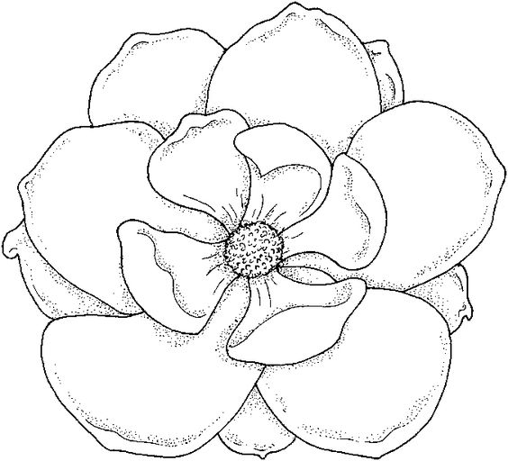 Coloring Page Flower png 677615 Pxeles