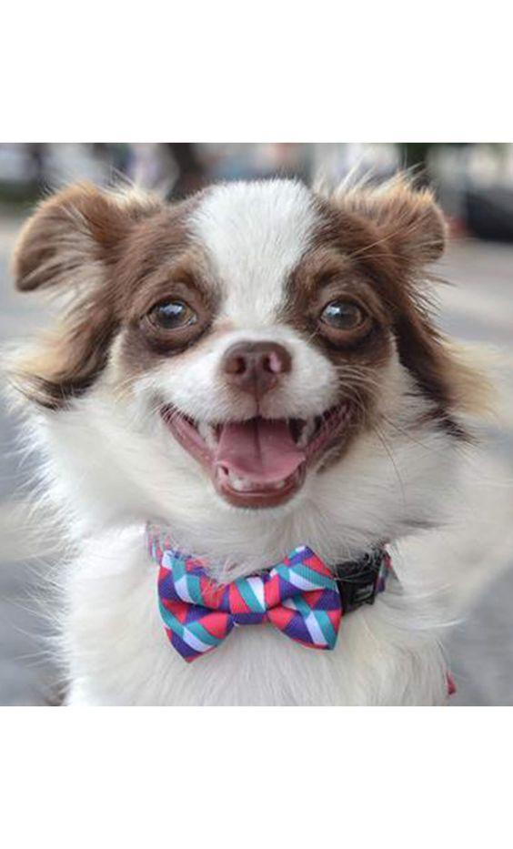 Las pajaritas para perros de ZeeDog son el complemento perfecto para esos perros atrevidos a los que les gusta ir a la moda, colócala en su collar y deja que se luzca ya sea en una fiesta o paseando por el parque. Esta elegante pajarita con un colorido estampado geométrico se convertirá en el...