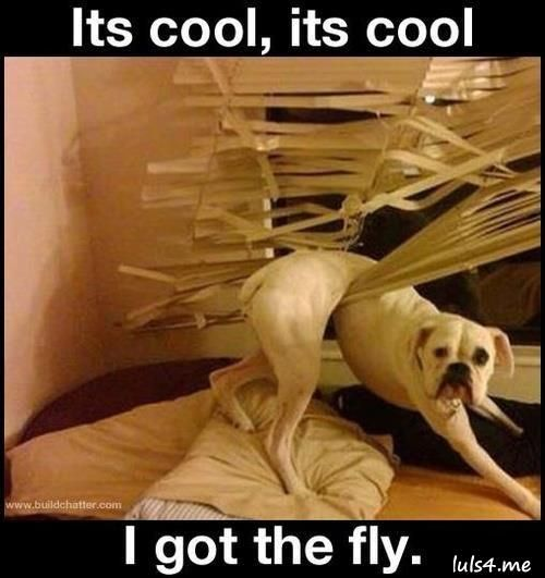 Its cool i got the fly