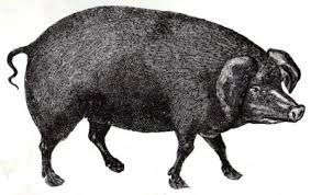 Resultado de imagen para black pork
