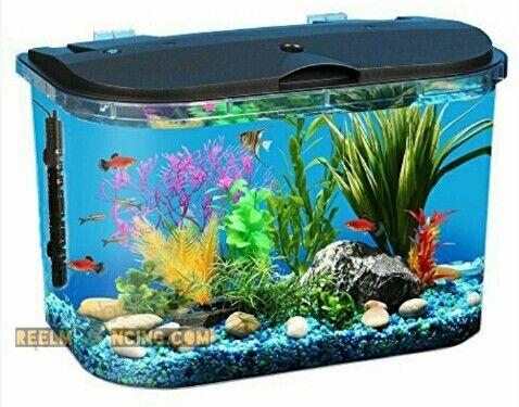 Fungsi Dan Cara Menggunakan Heater Aquarium Tahukah Anda Apa Itu Heater Saat Anda Mulai Memelihara Ikan Hi 5 Gallon Aquarium Aquarium Kit Betta Fish Tank