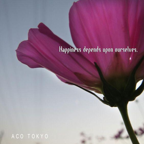 #写真 #Photo #TheFlowerOfAutumn  #Japan  #Cosmos  #Flower  #Glassiness  #Autumn