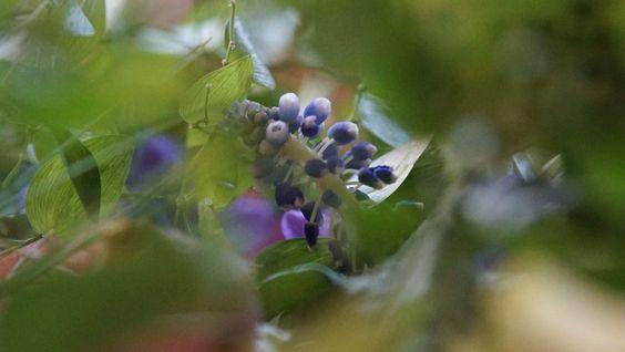 Salondeviola 緑に囲まれたお庭で小鳥の声を聞きながらひとやすみ