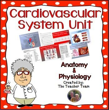 Cardiovascular System Unit (Circulatory System) : This 14  16 day unit covers the Cardiovascular System of the human body.  This can be used in Anatomy/Physiology class and can also be used in Biology.  Great for any level student from English Learner - EL - to more advanced students.
